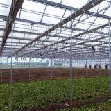 Heißer Verkaufs-landwirtschaftliches Bauernhof-Polycarbonat-Gemüse-Gewächshaus