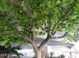 Il verde lascia l'albero di Maidenhair artificiale (per la decorazione di indoor&outdoor)