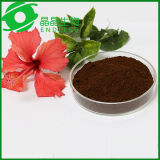 Guangzhou Endless Extract Powder Orgánica Reishi Mushroom