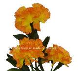 Única haste flor artificial/plástica/de seda do cravo (XF30032)