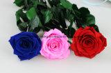 기념품은 꽃 Immortal 꽃 다채로운 장미 보전 GIF 여자 친구 발렌타인 데이 결혼식 훈장 꽃을 보존했다