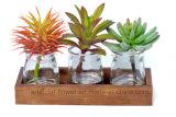 Un insieme di 3 piante succulenti artificiali con i POT di vetro trasparenti per la decorazione