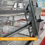 cage galvanisée à chaud de poulet/matériel augmentant automatique pour le poulet d'un jour