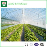 中国の野菜のための卸し売り電流を通された鋼鉄管プラスチックPo/のPEのフィルムのマルチスパンのトンネルの温室かHydroponicsまたは庭または花の家または農業