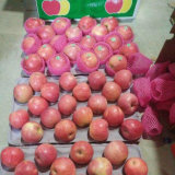 Surtidor profesional de Qinguan fresco chino Apple