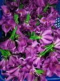 Migliori fiori artificiali di vendita del giglio di Calla