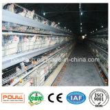Het Systeem van de Kooi van het Landbouwbedrijf van het gevogelte met Automatische Machine
