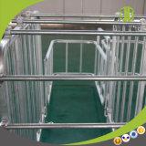 Heißer Gganlanized Schwangerschaft-Stall für Schweinezüchterei-Geräte