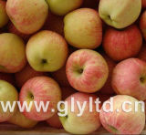 Buena calidad para exportar la estrella Apple roja fresca