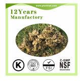 Estratto dell'erba dell'estratto dello zenzero di Gingerols 5%/Gingerols 10% /Curcumin 98%