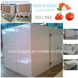 Caminhada no armazenamento frio mais frio para armazenar o tomate