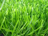 サッカーの草、スポーツの草、フットボールの草