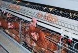 デザインおよびインストールを持つ家畜の農業の自動機械装置