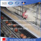 Cage de couche de poulet de ferme avicole/système automatiques cage de poulet pour le marché de l'Ouganda