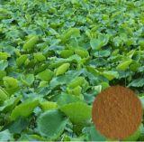 2015の熱い販売の減量の製品のロータス葉のエキス