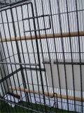 Vorbetrachtung Hendryx Haustier-Produkt-bearbeitetes Eisen-Flug-Rahmen-Haustier-RahmenBirdcage