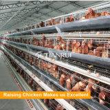 Una jaula de batería automática del pollo de la capa del marco para la granja avícola