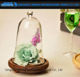 Di campana di vetro di vetro delle cupole dei Cloches di conservazione immortale del fiore