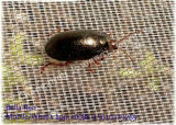 anti rede do inseto 50mesh para a rede da estufa de Contral da praga