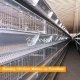 Camada automática do equipamento das aves domésticas que levanta a gaiola da galinha