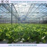 3.2mm/4mm milderten das ultra freie Floatglas, das für Gewächshaus verwendet wurde