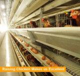 Цыплятина оборудований ферм цыпленка наслаивает клетку в Малайзии для сбывания