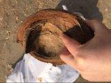 عمليّة قطع جوز هند قشرة قذيفة/ليف جوز هند متلف خشبيّة مرحة