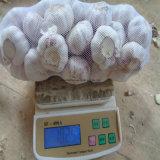 Новое цена Jinxiang чеснока урожая 2016
