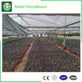 Invernadero multi del plástico/de la película del palmo de la agricultura para plantar