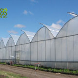 Estufa Growing da multi morango da extensão