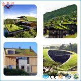 Membrana impermeável modificada Sbs do betume da alta qualidade para o telhado plantado