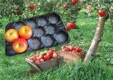 Bandejas de empaquetado garantizadas de la fruta y verdura fresca respetuosa del medio ambiente de los PP de la calidad