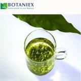 Grüner Tee-Auszug für Nahrung und Getränk