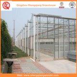 Landwirtschaft/Handelspolycarbonat-Blatt-Garten-grünes Haus für Blumen