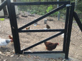 Rete metallica del pollo con il prezzo competitivo