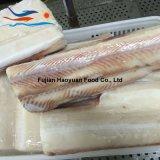2017 raccordo congelato la Cina dello squalo blu dei pesci