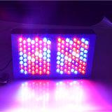 600W LED는 원예 점화를 위한 램프를 증가한다