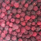 Zl-1046 Anic Blackberry zl-1046-1