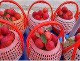 Nouveau panier de plumage de fruits en plastique