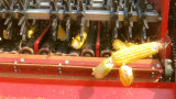 Maquinaria de colheita do milho para a colheita e a casca da orelha de milho