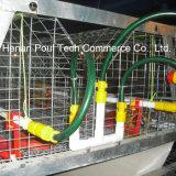 Цыпленок курочки арретирует оборудование цыплятины клеток цыпленока батареи малое клетки рамки