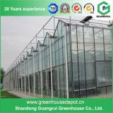 Парник хорошего качества стеклянный для Hydroponic растущий систем