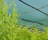 Сеть окликом зеленого цвета HDPE анти- для земледелия