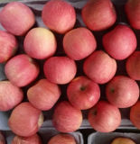 Neuer Getreide-Export chinesischer roter STANDARDFUJI Apple