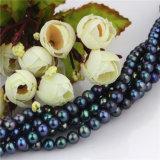 La perla rotonda vicina d'acqua dolce del pavone del filo 7-8 il millimetro aa della perla mette insieme all'ingrosso