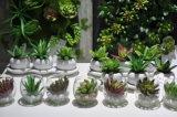 Plantes et fleurs artificielles de la centrale succulente Gu-SD0367