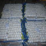 Bianco puro del nuovo aglio cinese del raccolto in piccolo sacchetto