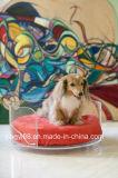 O fabricante acrílico o mais novo de Shenzhen da base do animal de estimação