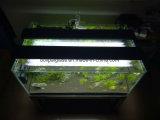 De mini Tank van de Vissen van het Aquarium van het Glas met LEIDEN Licht