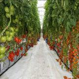 Invernadero hidropónico de la PC del invernadero barato de la hoja para la venta